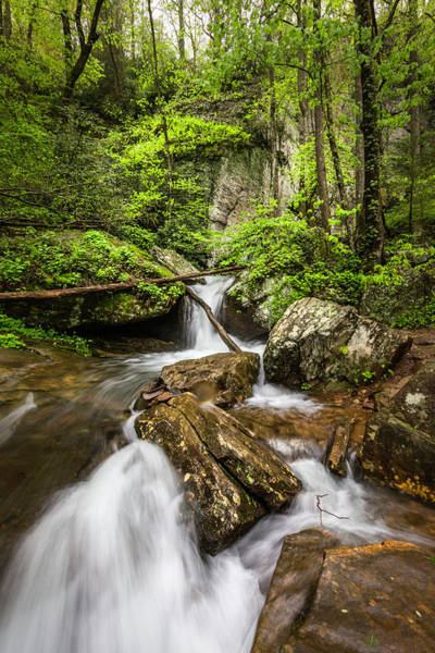 Photograph - Morning Cascades In The Forest by Debra and Dave Vanderlaan