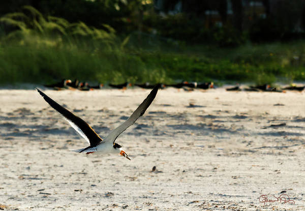 Photograph - Morning Catch by Susan Molnar