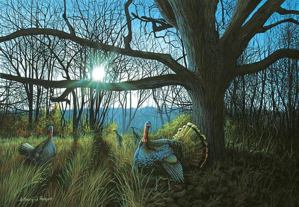 Morning Chat - Turkey Art Print
