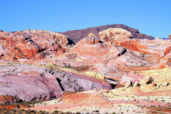 Wall Art - Photograph - Morning Color - Valley Of Fire by Douglas Taylor