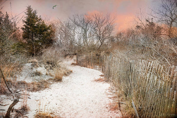 Photograph - Morning Dune by John Rivera