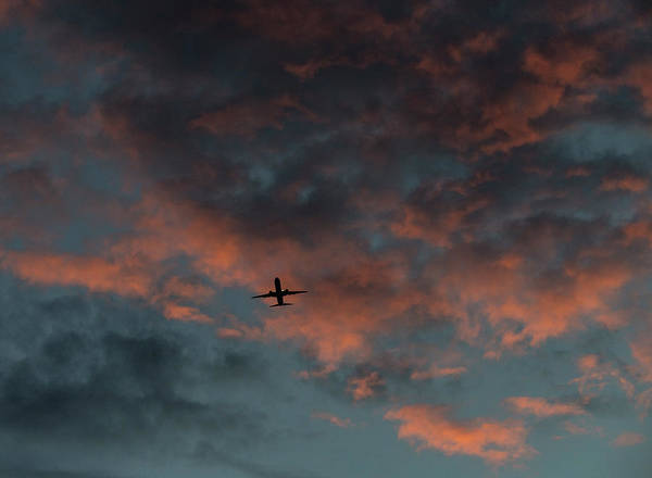 Photograph - Morning Flight by Alex Lapidus