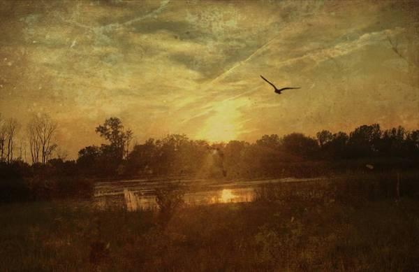Photograph - Morning Flight by Jack Wilson