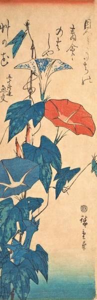 Glory Painting - Morning Glories by Utagawa Hiroshige