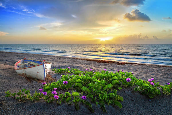 Photograph - Morning Glory At The Beach by Debra and Dave Vanderlaan