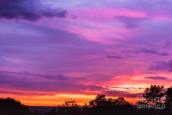 Photograph - Morning Glory by Steven Natanson
