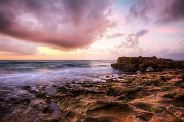 Photograph - Morning Glow On Coral by Debra and Dave Vanderlaan