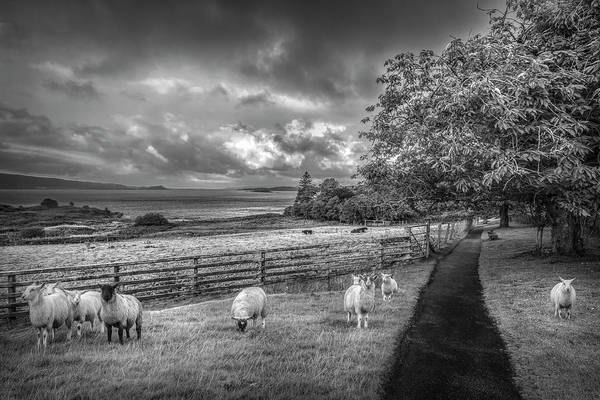 Photograph - Morning Grazing In Black And White by Debra and Dave Vanderlaan