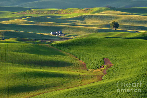Wall Art - Photograph - Morning Green by Mike Dawson