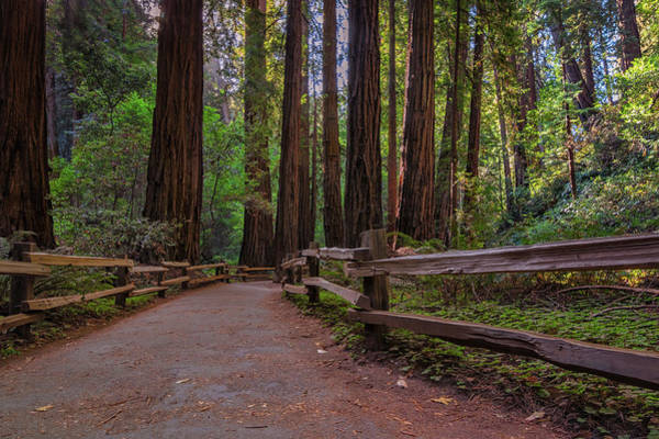 Photograph - Morning In Muir Woods by Kristen Wilkinson