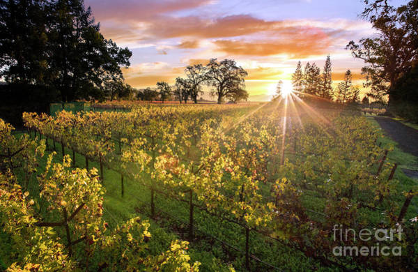 Wall Art - Photograph - Morning In Napa by Jon Neidert
