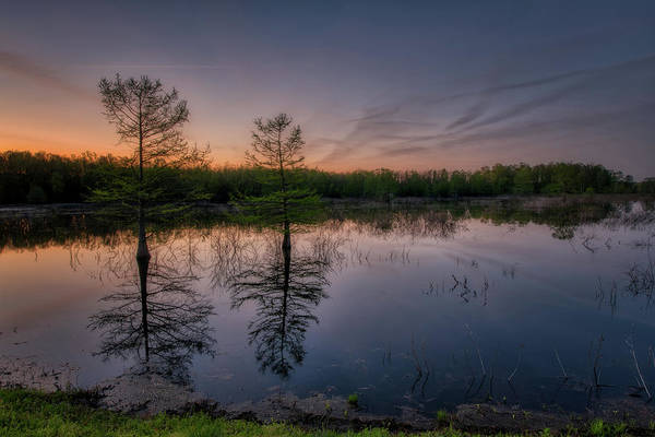 Bald Cypress Photograph - Morning In The Mingo by Donna Caplinger