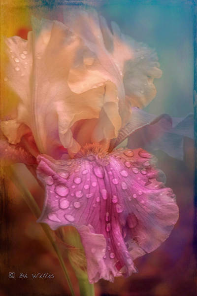 Photograph - Morning Iris by Bonnie Willis