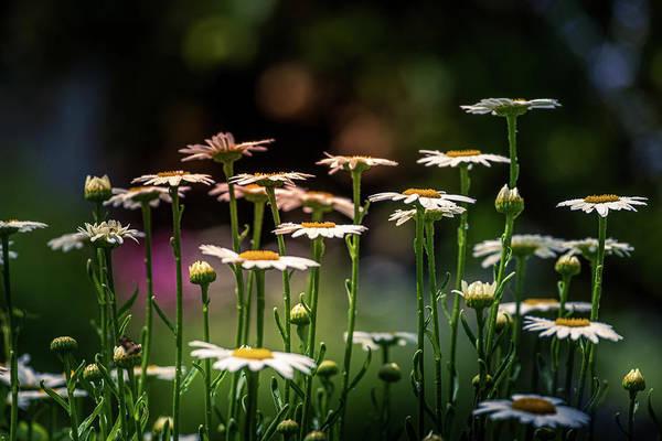 Photograph - Morning Light by Allin Sorenson