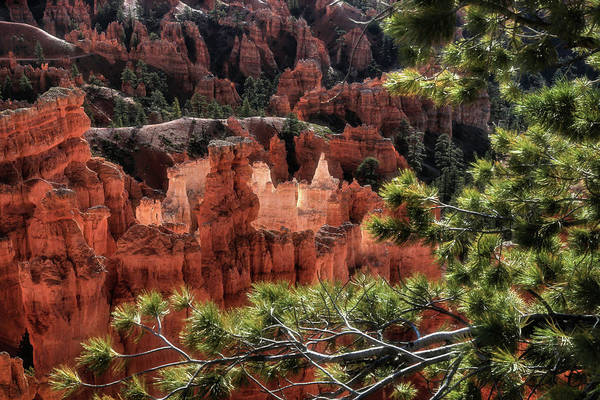 Wall Art - Photograph - Morning Light At Bryce Canyon by Donna Kennedy