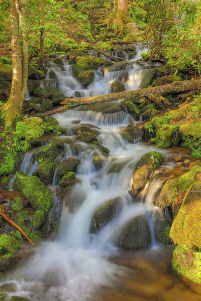 Photograph - Morning Light On Smoky Mountain Waterfall by Dan Sproul