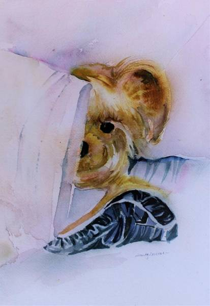 Wall Art - Painting - Morning Little Morkie by Mindy Newman