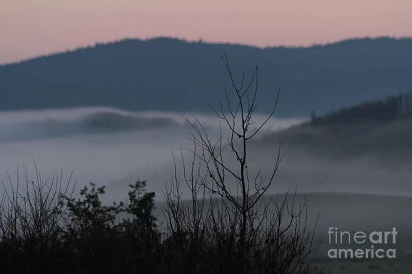 Photograph - Morning Mist by Ann E Robson