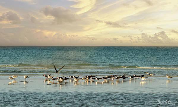 Photograph - Morning On Lido Beach by Susan Molnar