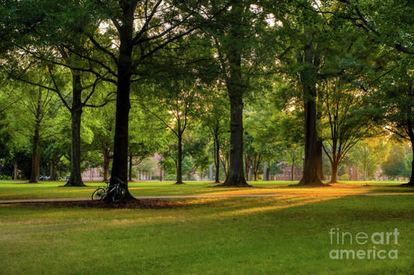 Wall Art - Photograph - Morning Sun Rays On Campus by Amy Dundon