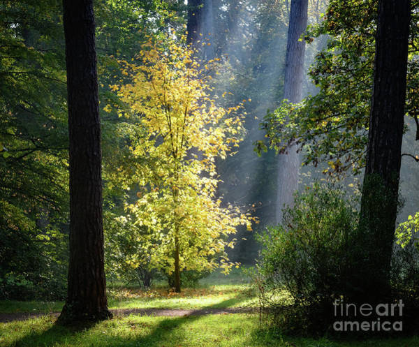 Photograph - Morning Sun Through The Trees by Colin Rayner
