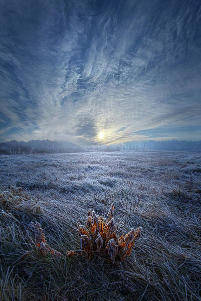 Photograph - Morning Time Blues by Phil Koch