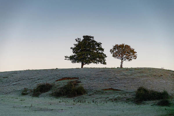 Photograph - Morning Trees by Mark Hunter