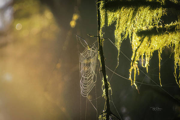 Photograph - Morning Web by Bill Posner