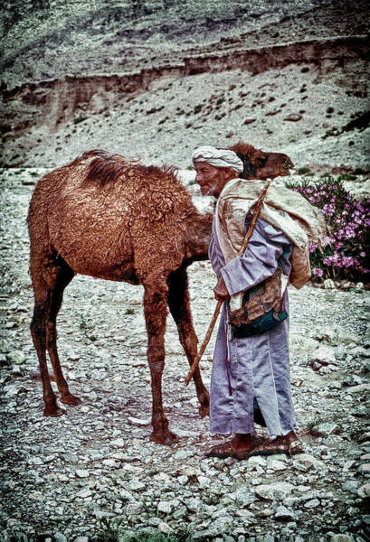 Photograph - Moroccan Man With Camel by Robert Woodward
