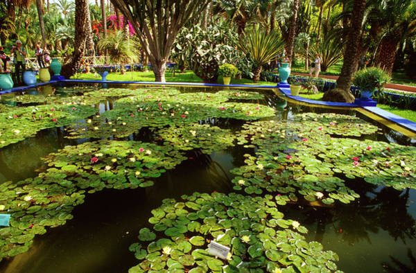 Botanical Photograph - Morocco, Marrakech, Jardin Majorelle by Education Images/uig