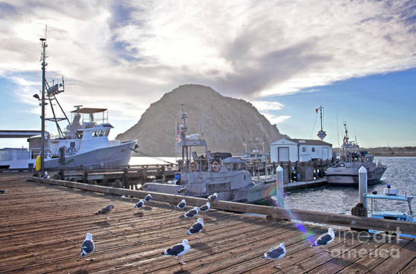 Photograph - Morro Bay Harbor by Michael Rock