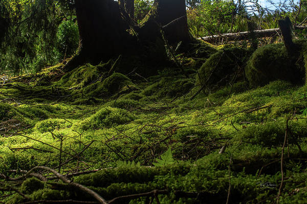 Photograph - Moss Carpet by Bill Posner