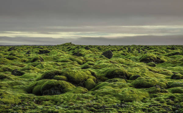 Horizontal Landscape Photograph - Moss Covered Lava Field On Route 1 by Ed Norton