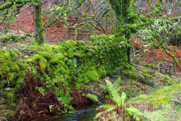 Wall Art - Photograph - Moss Covered Stone Wall At Tarn Hows Lake District by Louise Heusinkveld