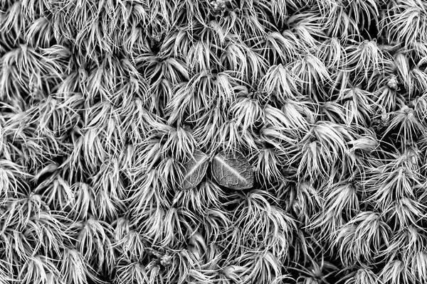 Photograph - Moss by Dawn J Benko