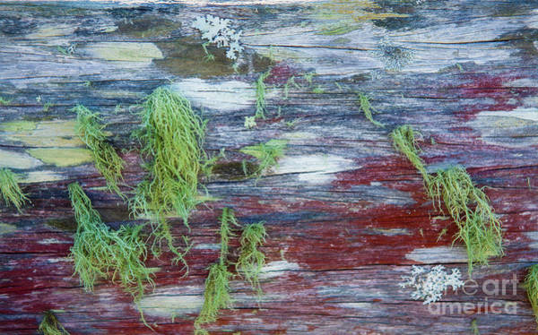 Wall Art - Photograph - Moss On Old Fence by Sheila Smart Fine Art Photography