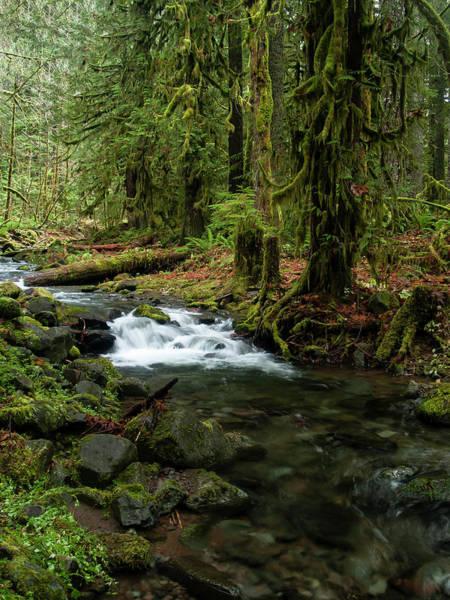 Photograph - Mossy Cascade by Steven Clark