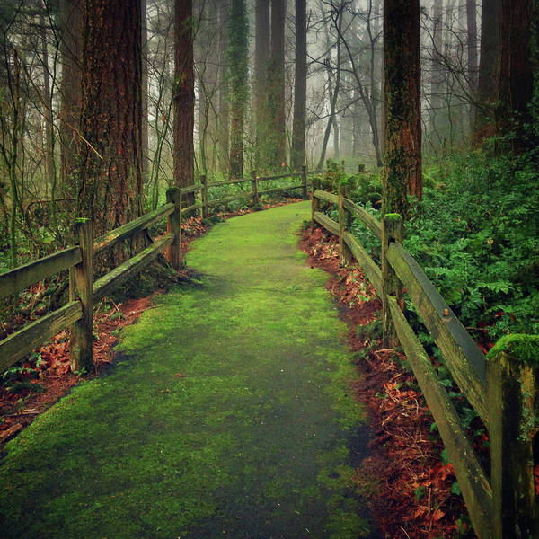 Fence Photograph - Mossy Path by Andipantz