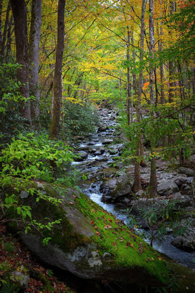 Photograph - Mossy Stream In Autumn by Debra and Dave Vanderlaan