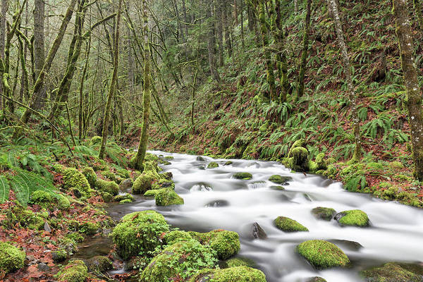 Photograph - Mossy Stream by Nicole Young