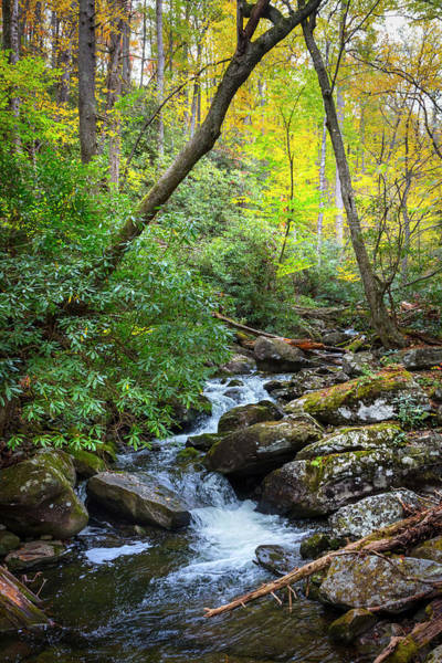 Wall Art - Photograph - Mossy Stream Under The Trees by Debra and Dave Vanderlaan