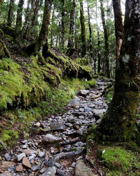 Photograph - Mossy Trail, Arthurs Pass, New Zealand by Sarah Lilja