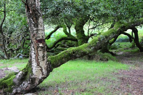 Photograph - Mossy Tree At The Shore Of Lake. Wicklow Hills by Jenny Rainbow