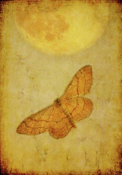 Randle Photograph - Moth by Photo - Lyn Randle