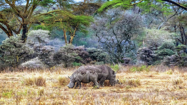 Wall Art - Photograph - Mother And Baby White Rhinos In Lake Nakuru by Susan Schmitz
