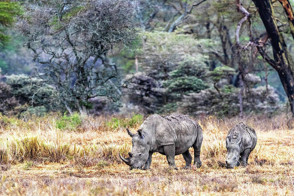 Wall Art - Photograph - Mother And Calf White Rhino In Kenya by Susan Schmitz