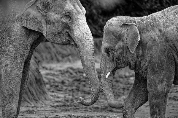 Photograph - Mother And Young One by Jonathan Davison