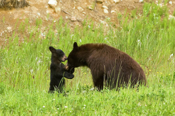 Emotion Photograph - Mother Bear With Her Cub by Visualcommunications