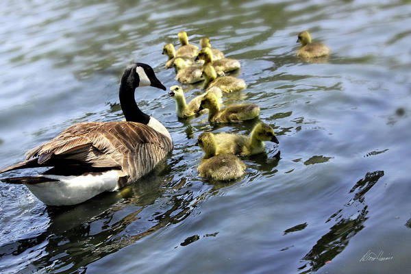 Photograph - Mother Goose by Diana Haronis