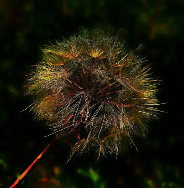 Photograph - Mother Nature's Fireworks by Mario MJ Perron